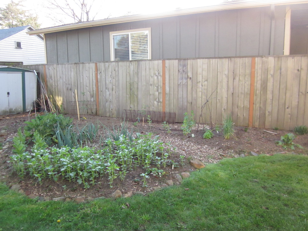 plantedveggiegarden.jpg