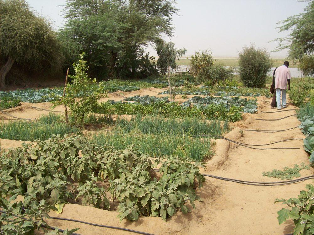 Women's Garden Mar 08 001.jpg