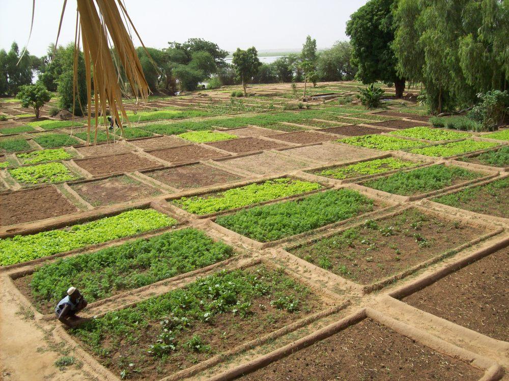 Djiderra Gardens Oct 08 006.jpg