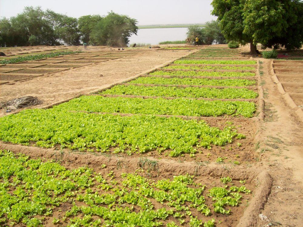 Djiderra Gardens Oct 08 001.jpg