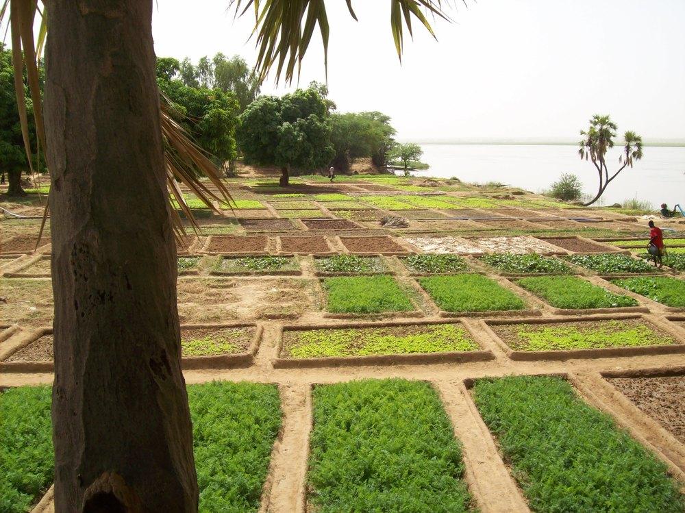 Djiderra Gardens Oct 08 025.jpg