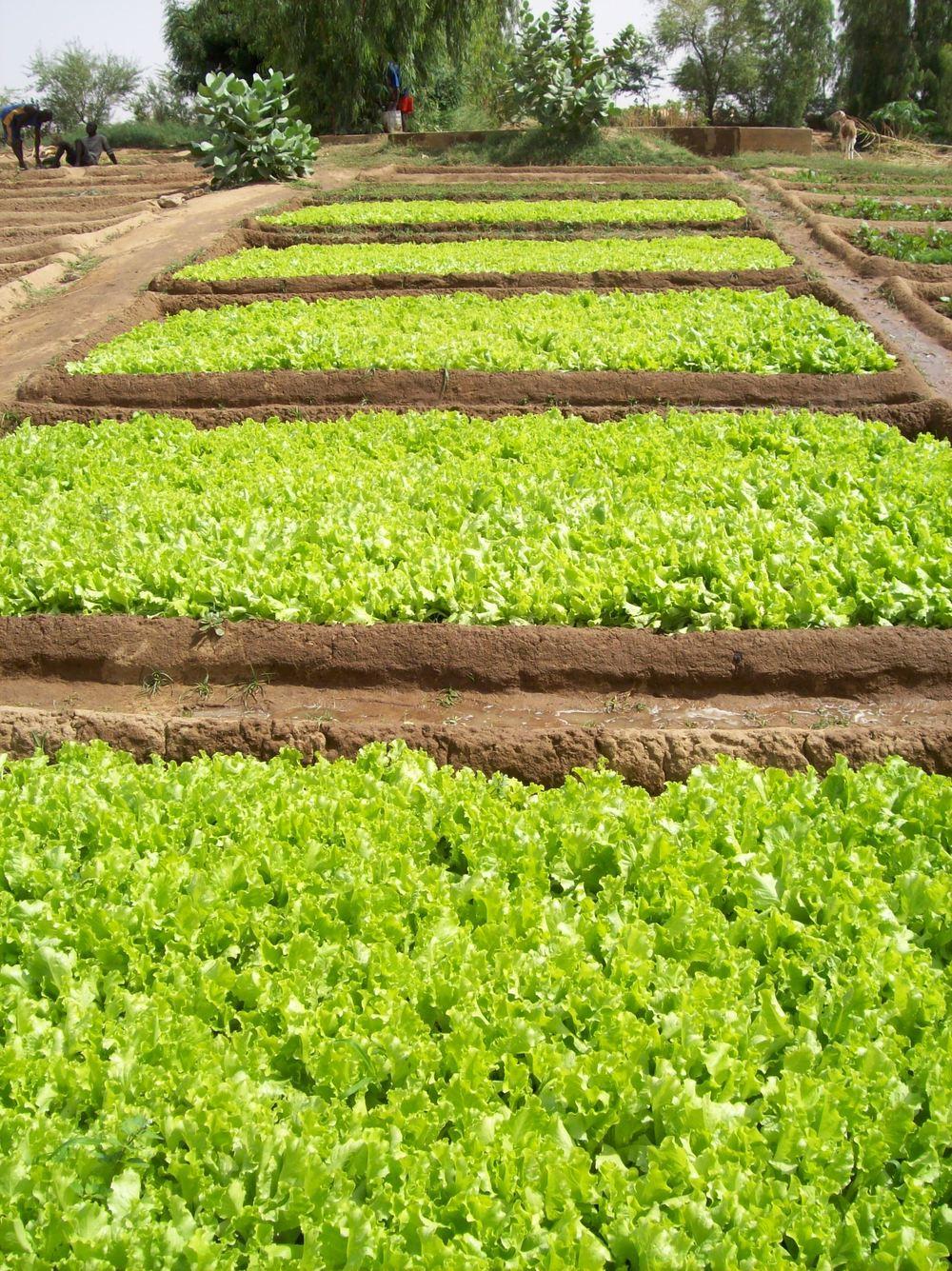 Djiderra Gardens Oct 08 033.jpg