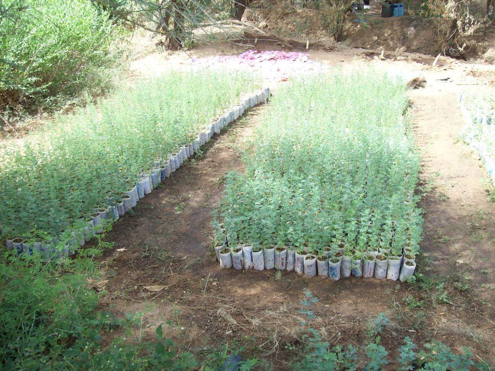 Djiderra Gardens Oct 08 032.jpg