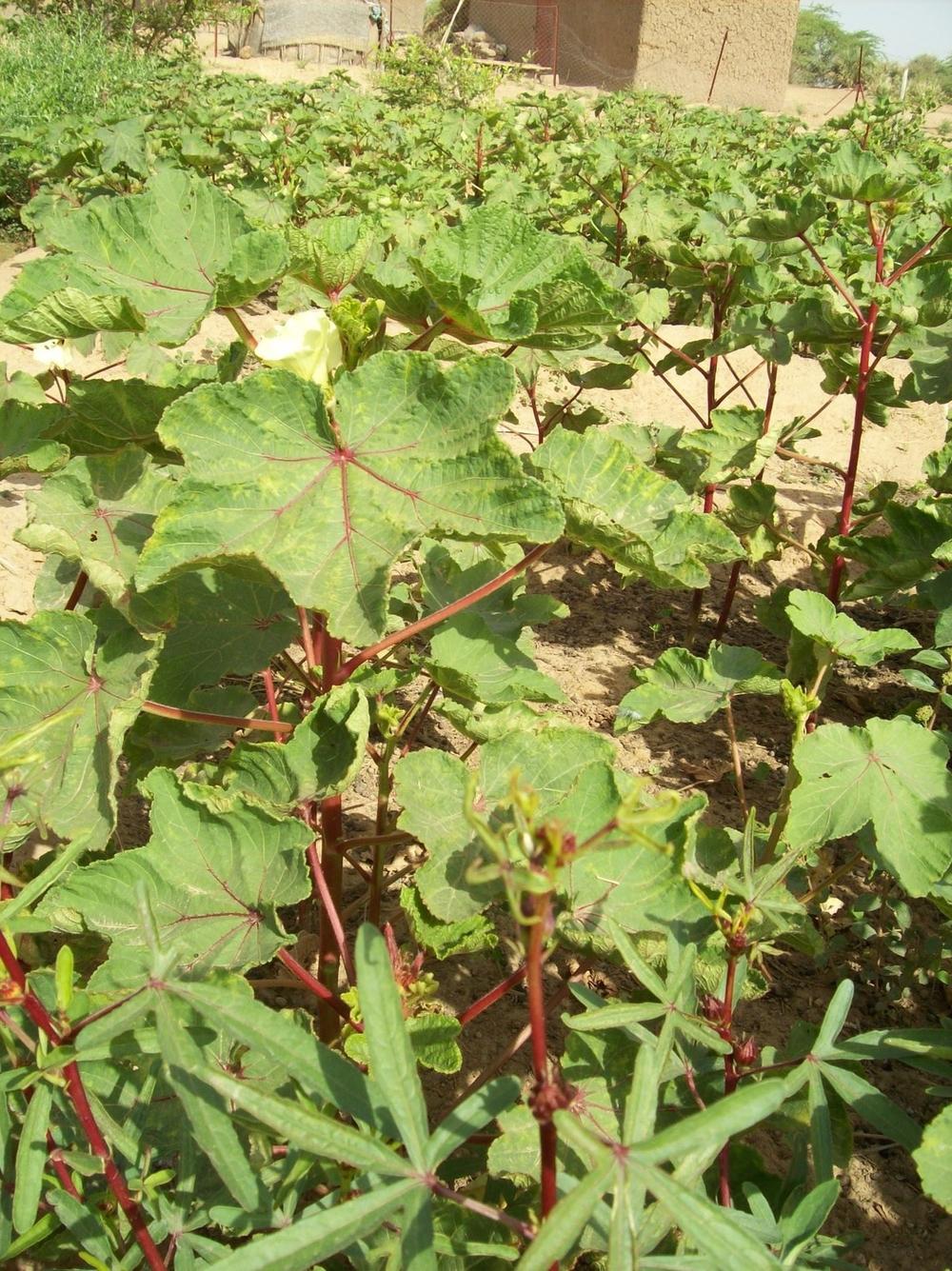 Women's Garden Sept 08 008.jpg