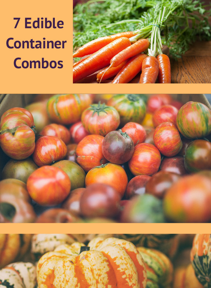 7-Container-Combos.jpg