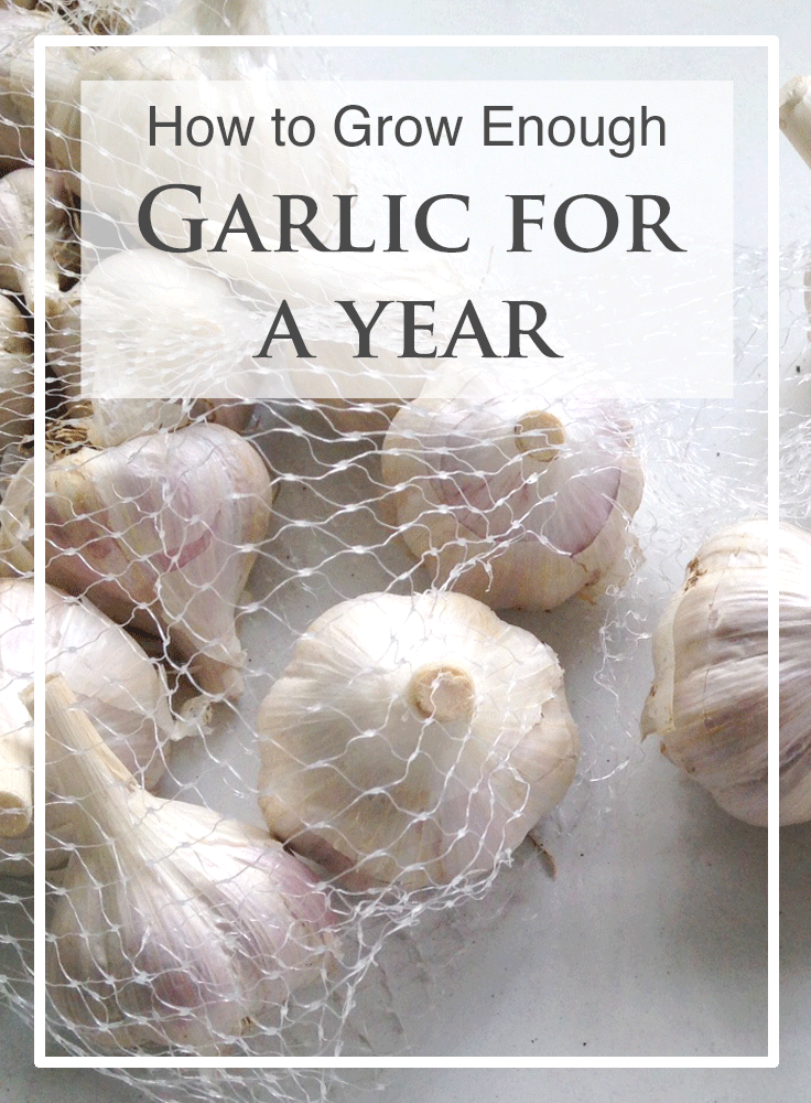 how to grow enough garlic for a year.png