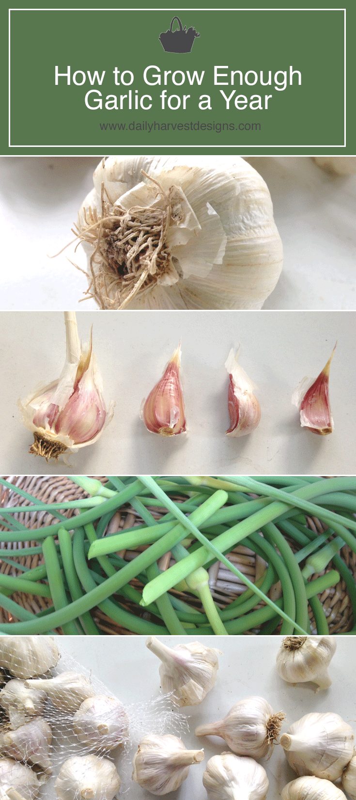 Garlic-for-a-year.png