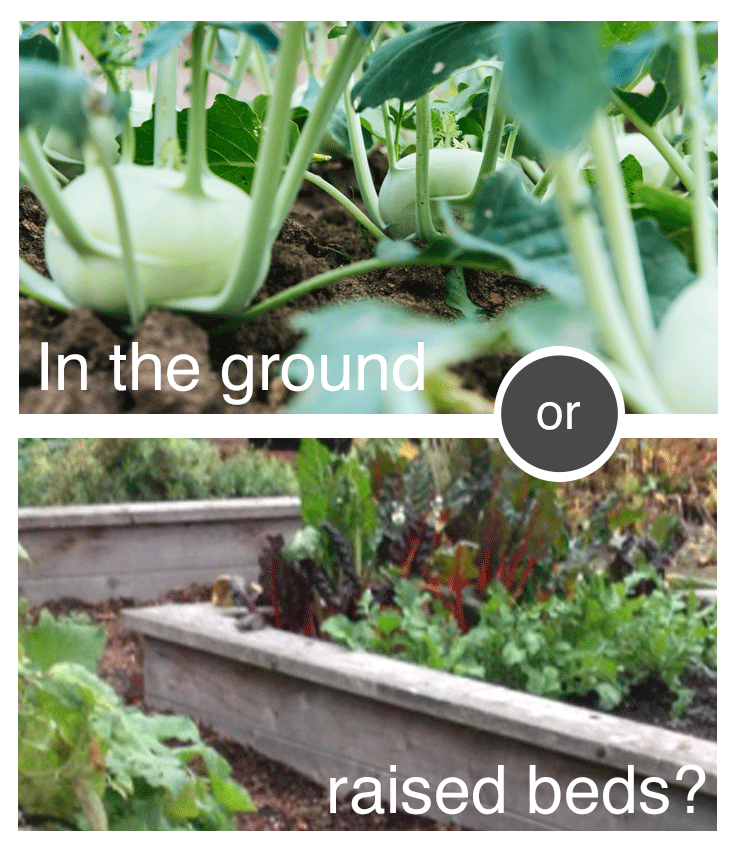 what-is-the-best-place-to-grow-veggies-1.png