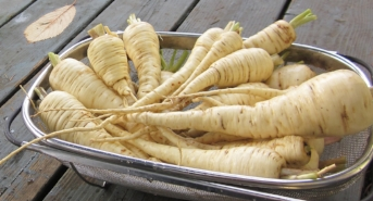 Parsnips are easy to grow and will even reseed themselves. Give them a try in your garden!