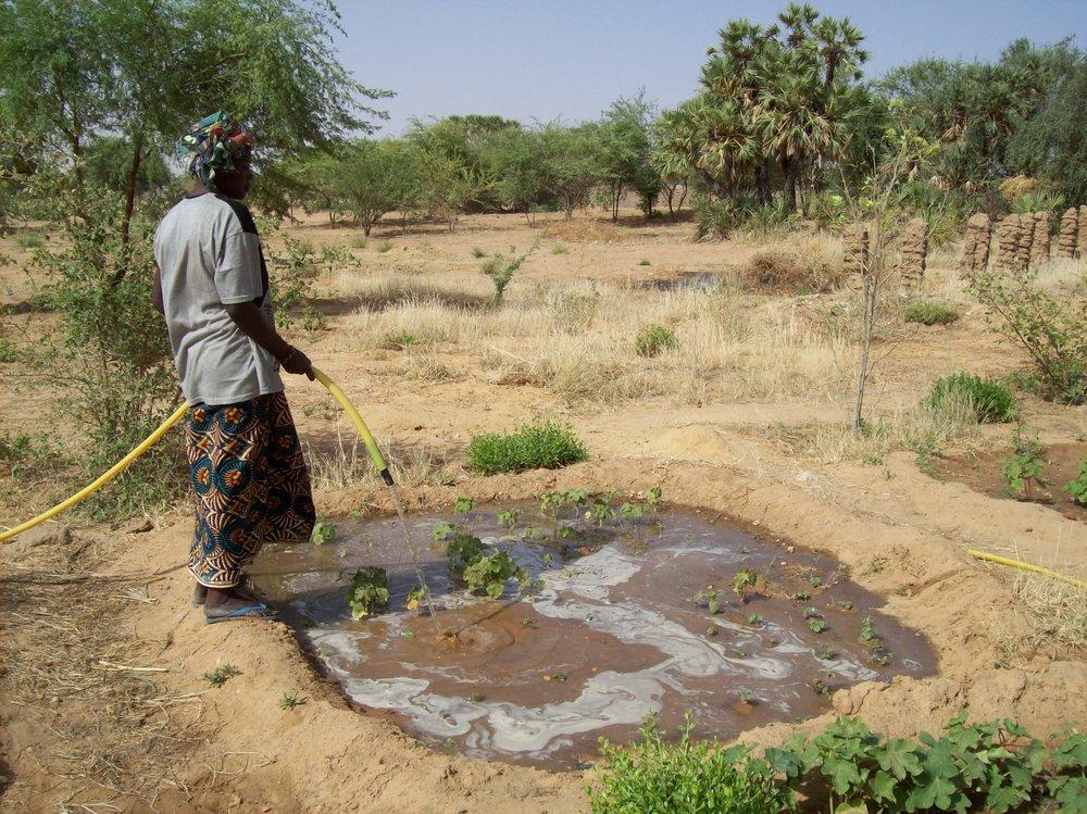 Nutrient rich water for the women's garden.jpg