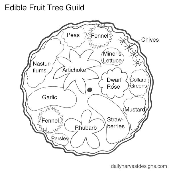 permaculture fruit tree guild.png