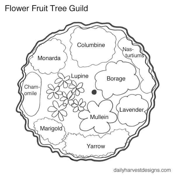 permaculture flowering fruit tree guild.png