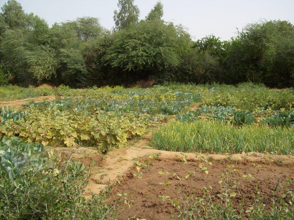 flood irrigation in Mali.jpg