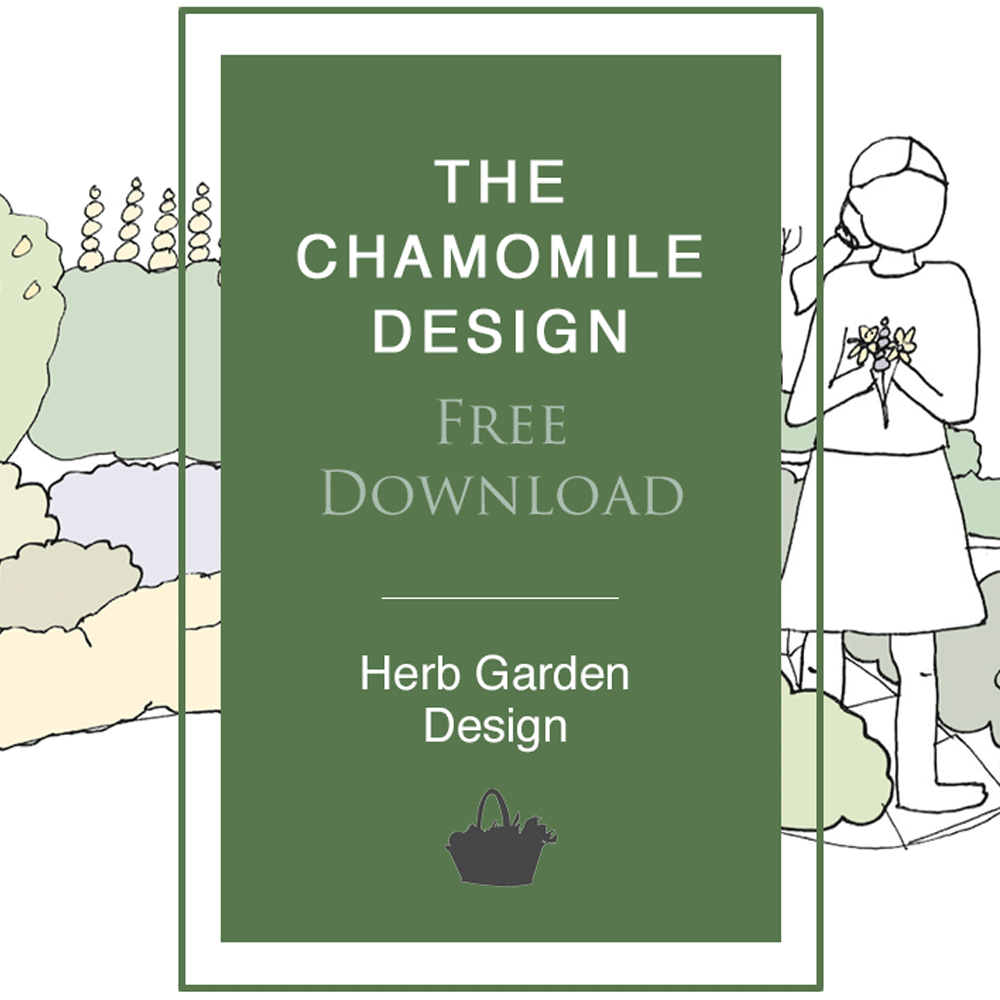 Chamomile-Design-Free-Download-Image-1000x1000px.png