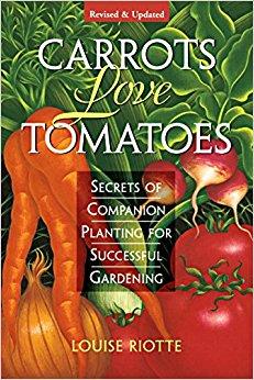 carrots love tomatoes.jpg