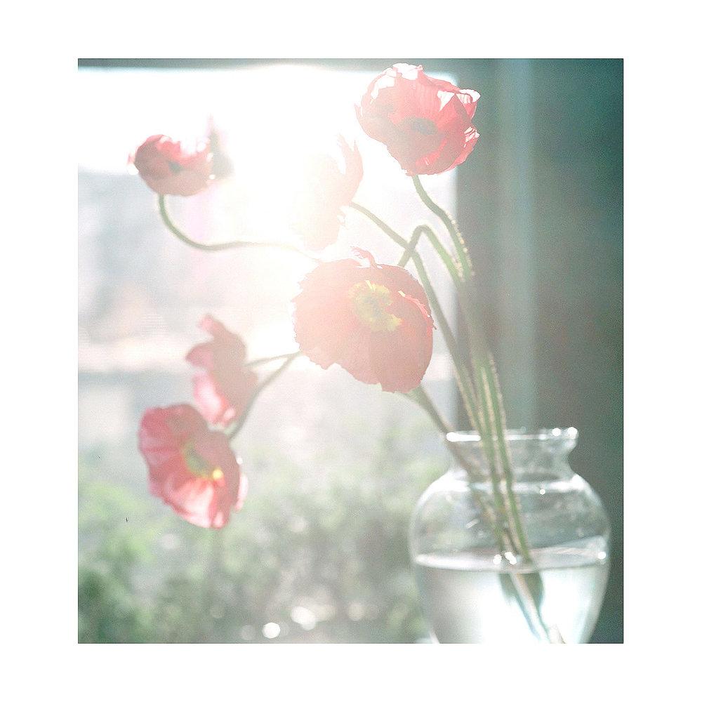 Flower-1a copy.jpg