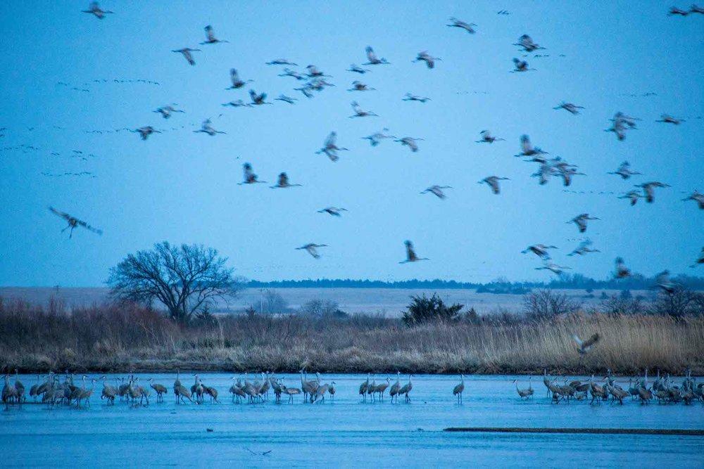 cranes_tyra1.jpg
