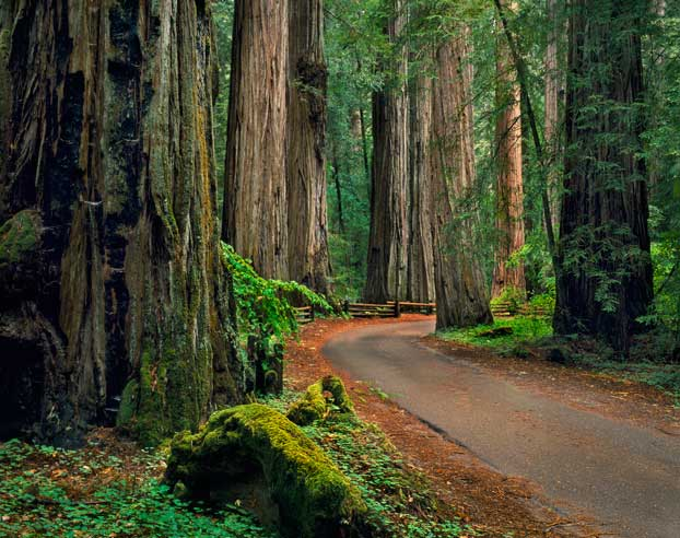 Armstrong-Redwoods-State-Natural-Reserve_image1.jpg