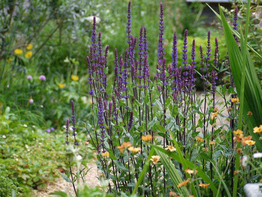 Iris Treinies Garden Design - This site is under construction.Check back soon.
