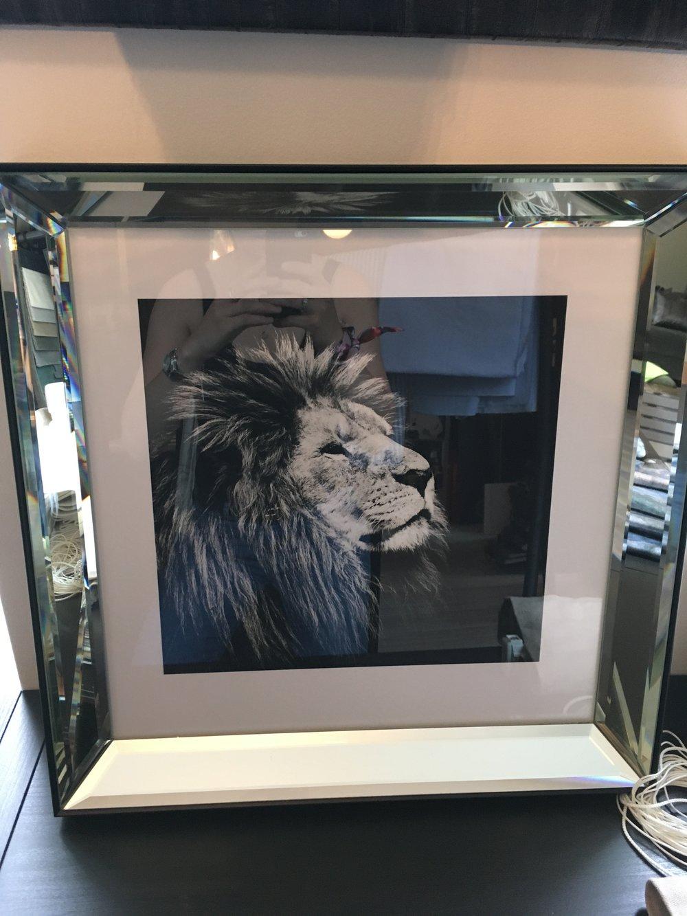 Fantastisk løvebilde - 1.900kr