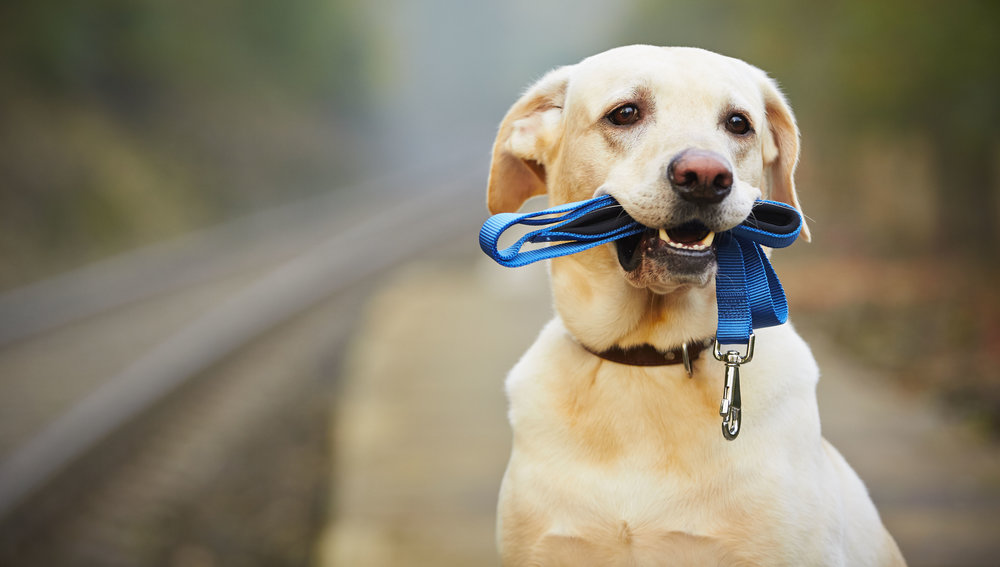 Dog Walking - includes Exclusive Services
