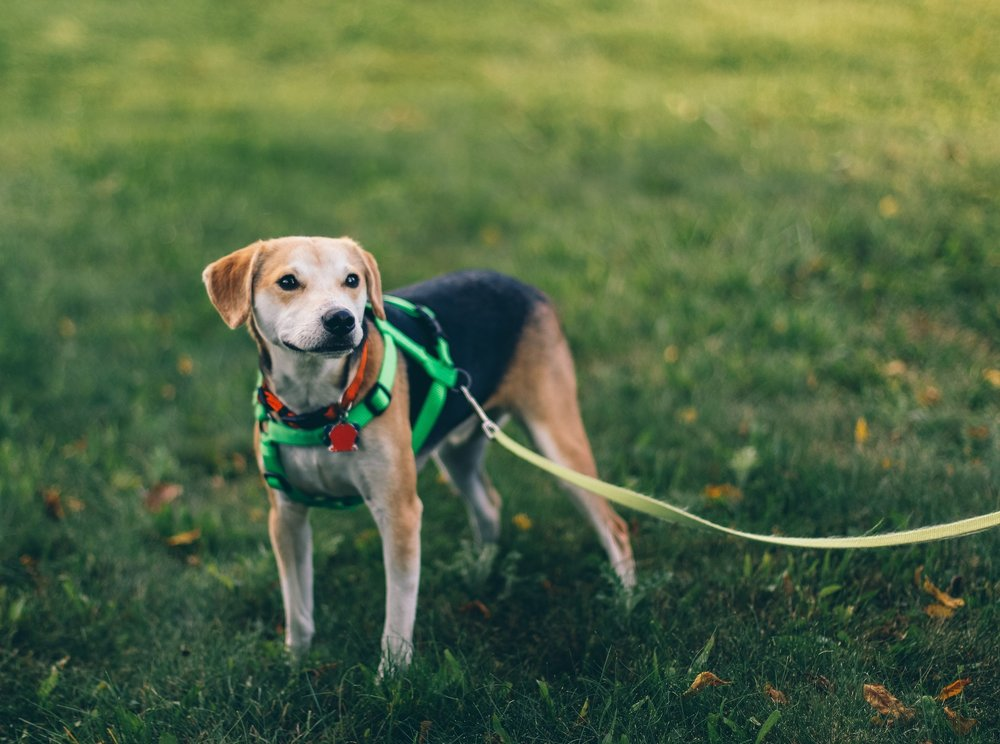 Dog Training - Private &Personalized for your Dog