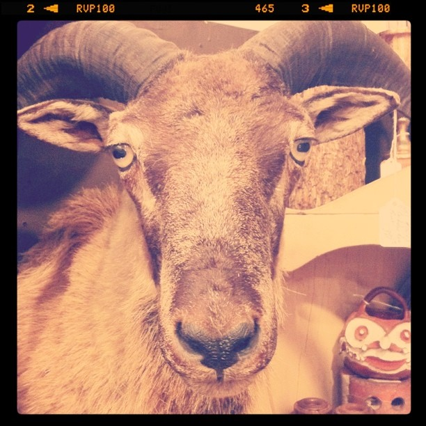#sadeyes (Taken with Instagram at Uncommon Objects)