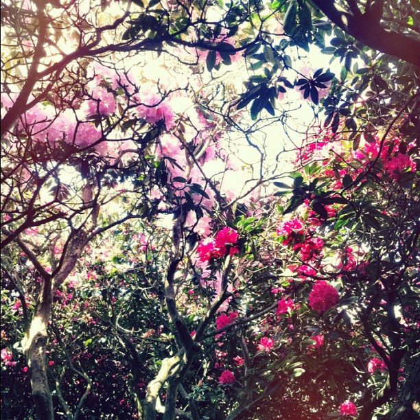 Floral canopy. #beautiful #heaven (Taken with  Instagram  at Hampstead Heath Ladies Ponds & Meadow)