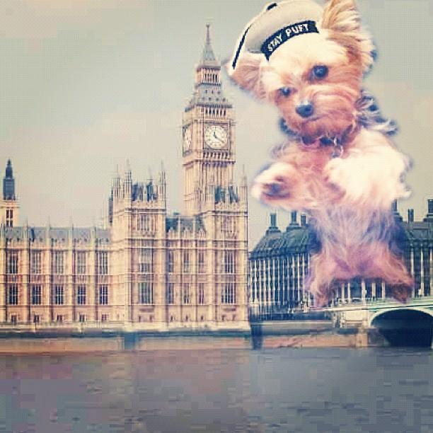 Somethin strange in yo neighborhood….. #BigCarms #London (Taken with Instagram at Big Ben)