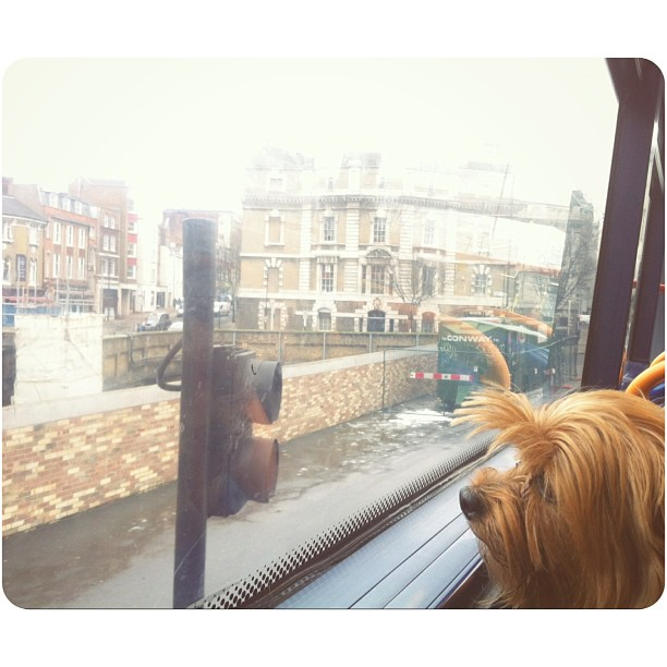Happy to have my most bestest assistant with me on errands today!! #yorkie #love #london