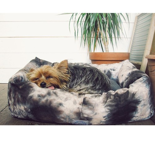 Yeah, I think it's safe to say she likes her new Fetch & Follow bed @three_tails ……. Maximum chills. #cutie #yorkie #potato (at Netil-Market Hackney)