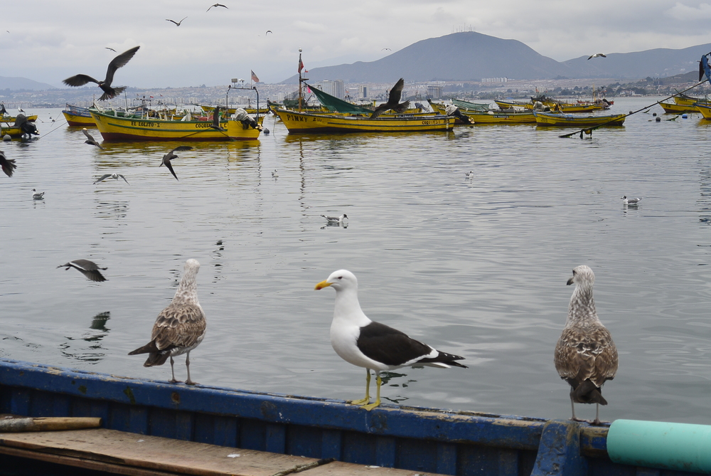 Port Harbor of Coquimbo Chile