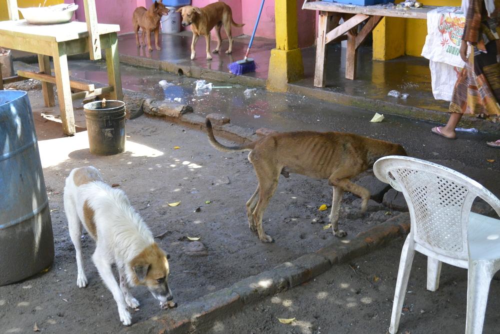 Corinto Nicaragua Stray Dogs