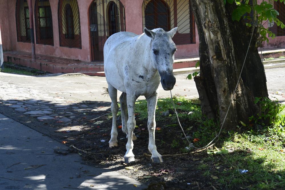 Corinto Nicaragua Abandoned Horse