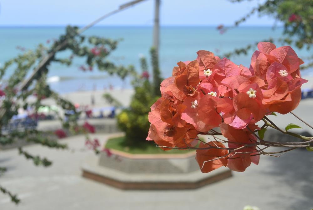 Manta Ecuador Flower