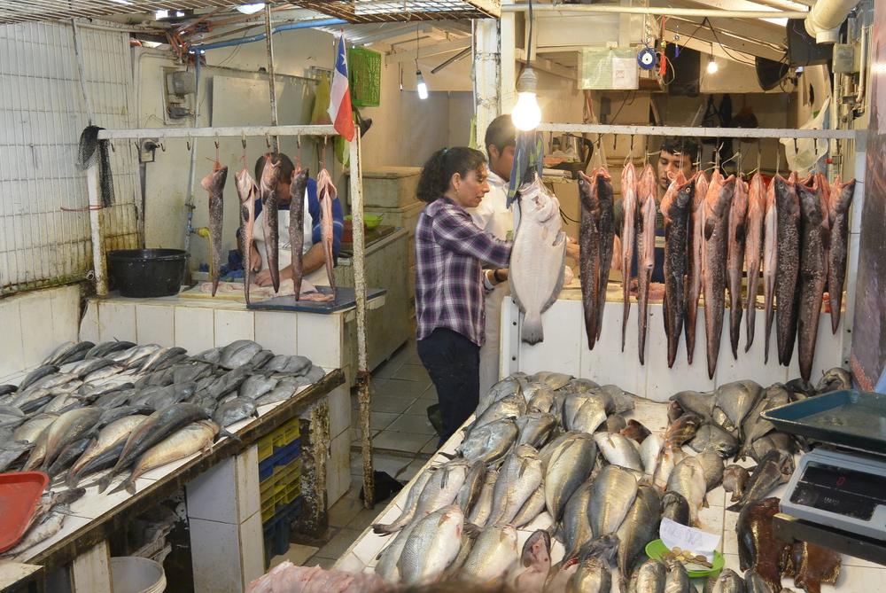 Coquimbo Chile Fish Market