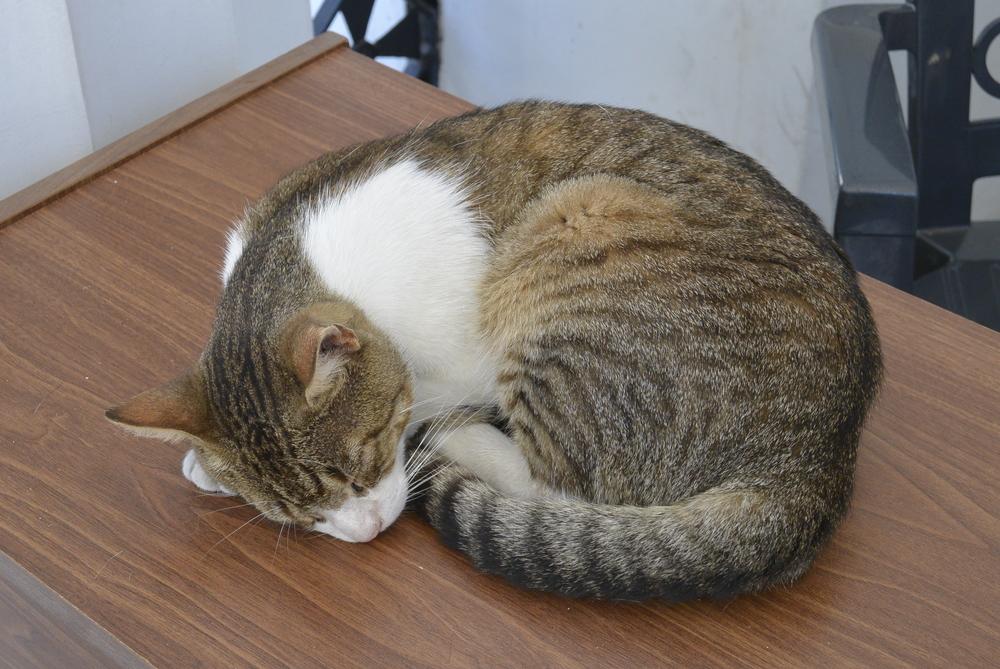 Buenos Aires Argentina cat