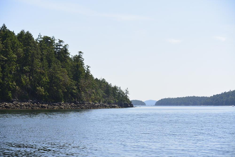 whale watching Saltspring Island