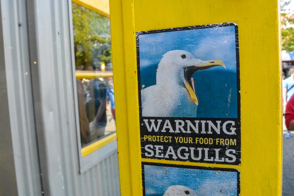 Granville Island seagull