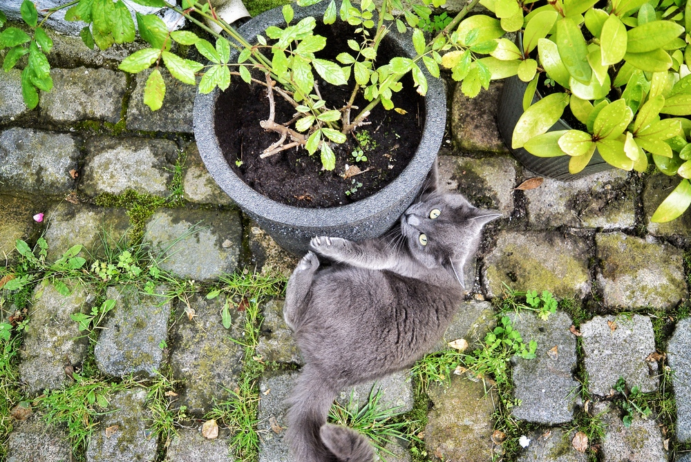 Cat in Bergen Norway