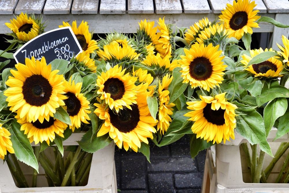 Sunflowers at the Amsterdam Flower Market