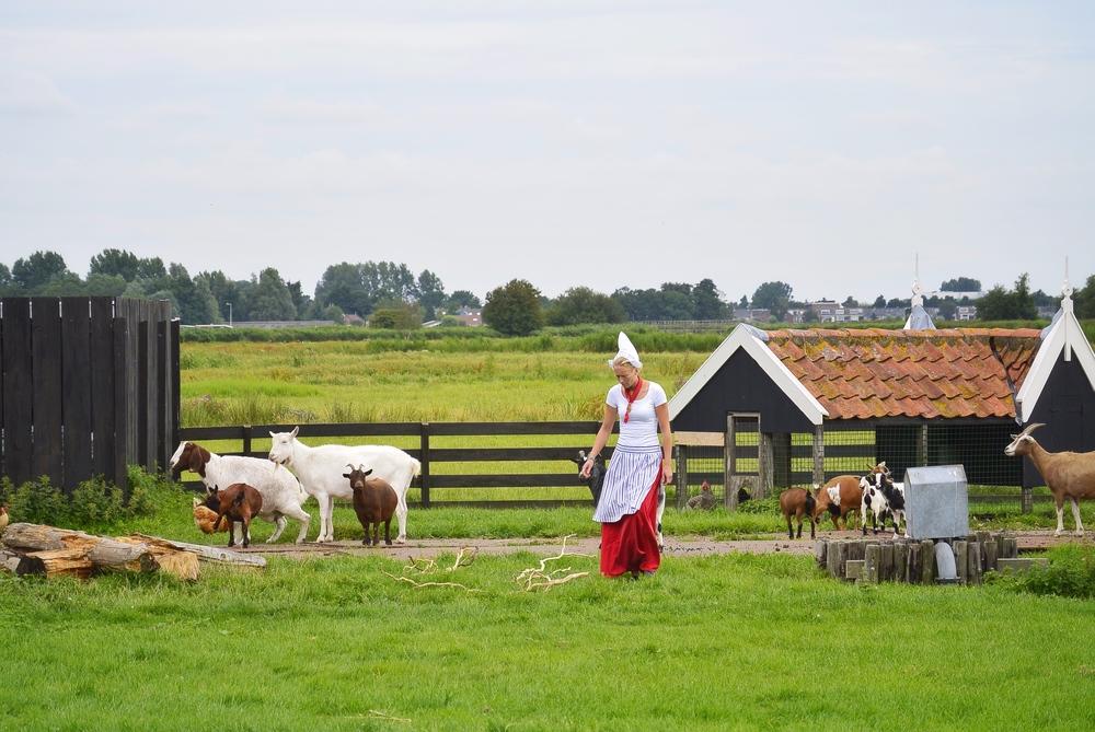 Dutch Farm with goats in Zaanse Schans