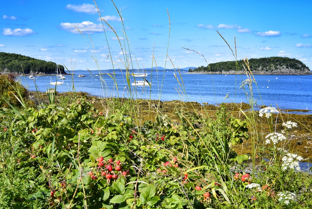 Bar Harbor Shoreline