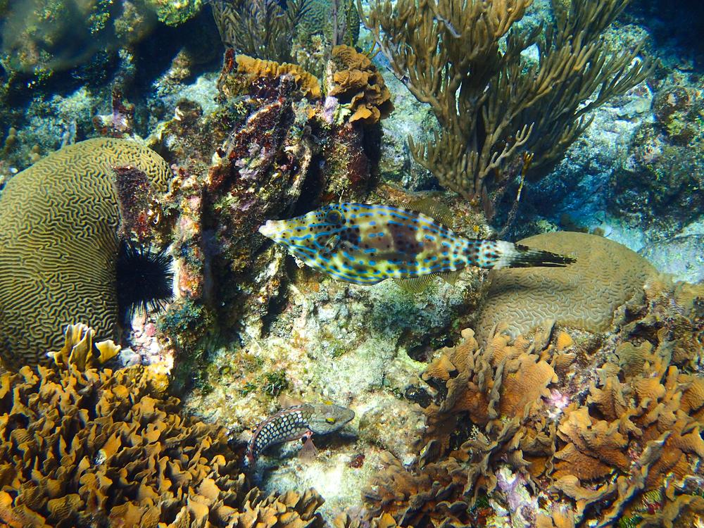 Caribbean fish