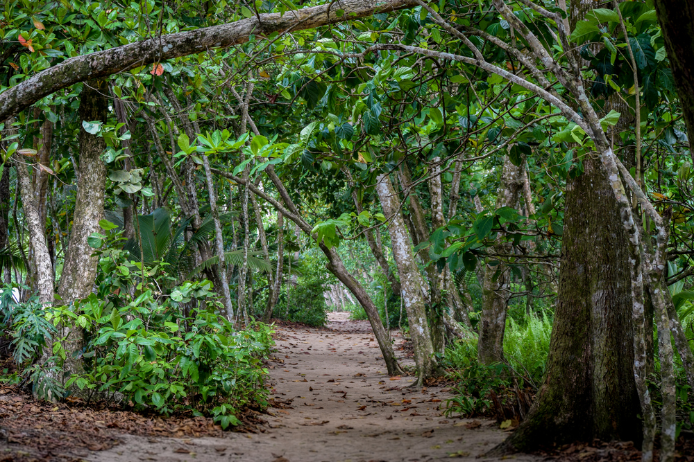 Jungle walk in Cahuita National Park