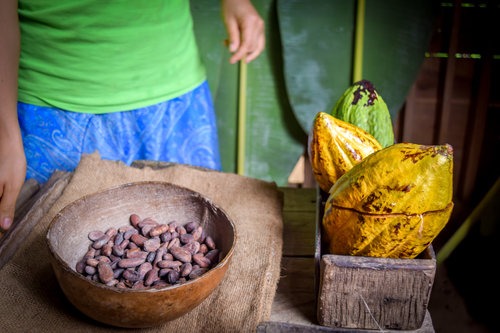 Visiting a Cacao House in Costa Rica