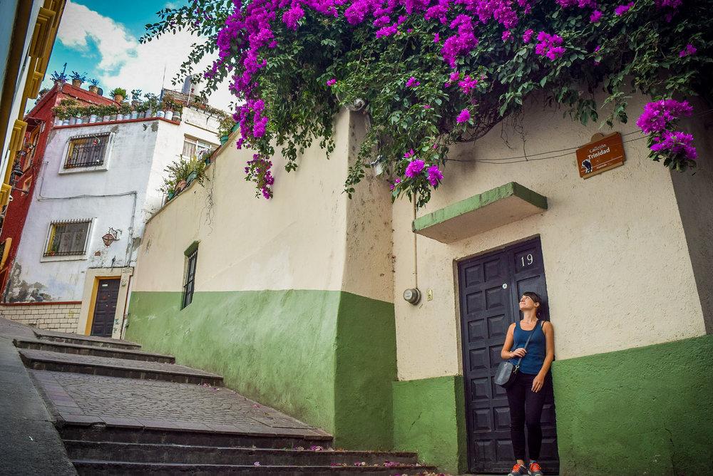 Bougainvilleas in Guanajuato