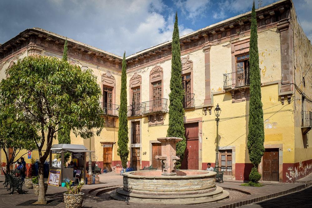 Skinny trees in Guanajuato