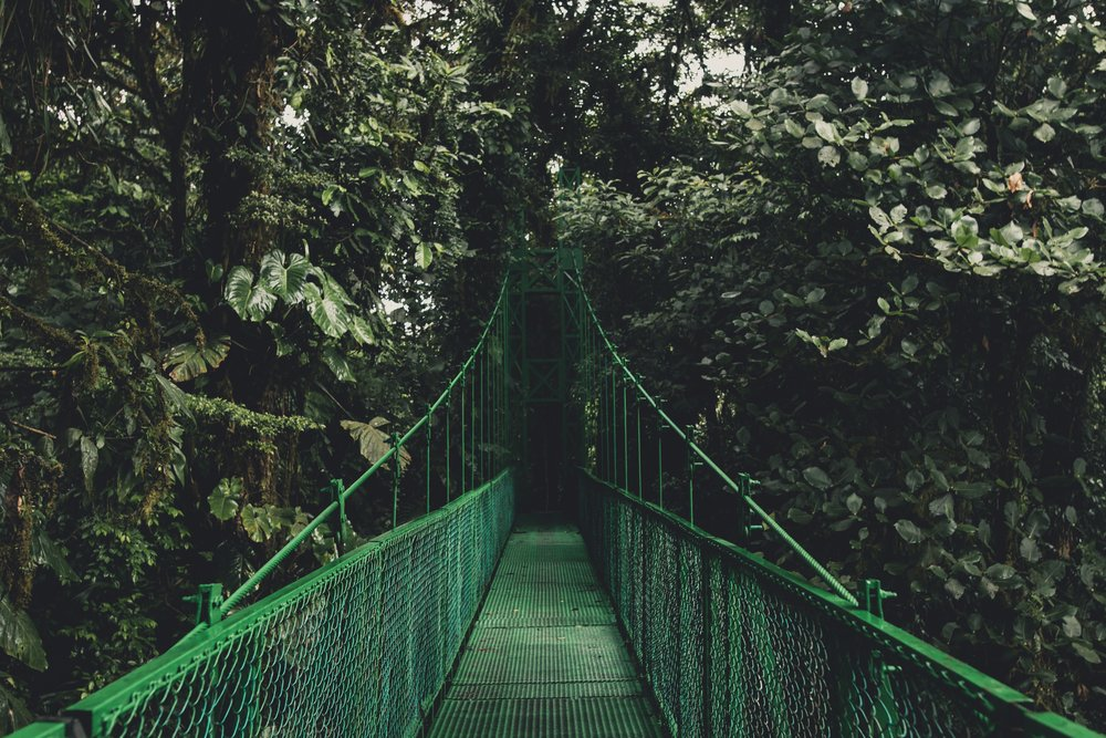 Bridge into the jungle