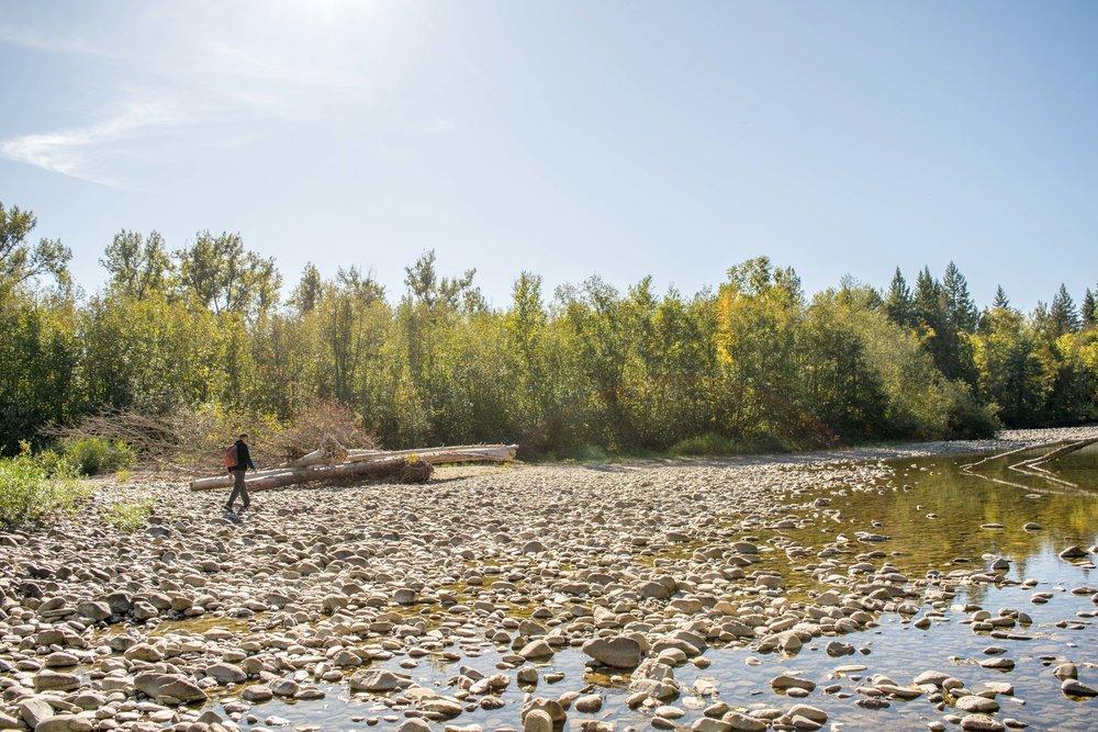 Walking along Adams River